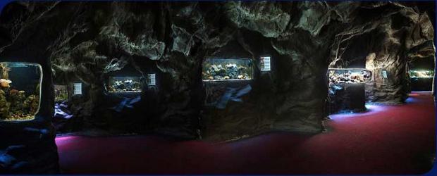 Přijďte si vyzkoušet video a foto techniku do Mořského světa v Praze Holešovicích ve čtvrtek 17.3.2011. Setkáte se tu mimo jiné se značkami Canon, Zacuto, Adobe, Marshall Electronics, Switronix, EIZO, […]